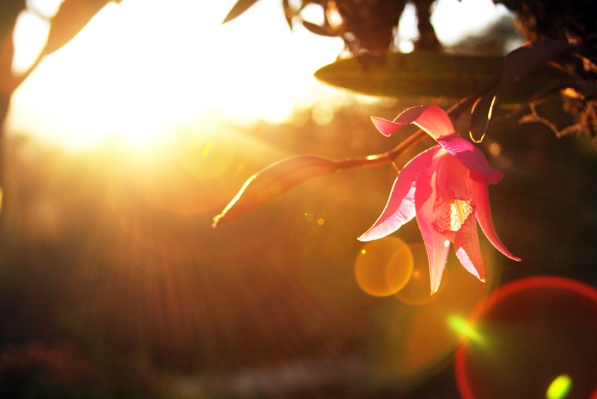 Wild orchid, Mexico